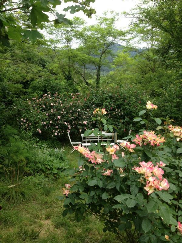 my-garden.jpg